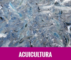 DISEÑO Y DESARROLLO DE UNA LINEA NUTRICIONAL ESPECIFICA Y MEJORADA PARA ACUICULTURA