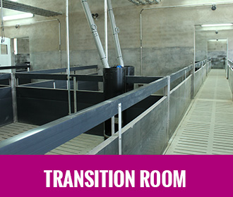 Transition room